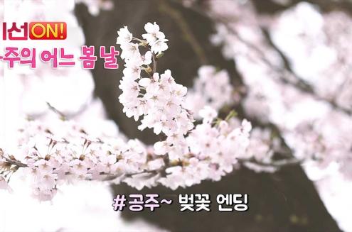 (흥미진진 공주) 공주의 어느 봄날(동학사 벚꽃축제, 벚꽃 십리길)